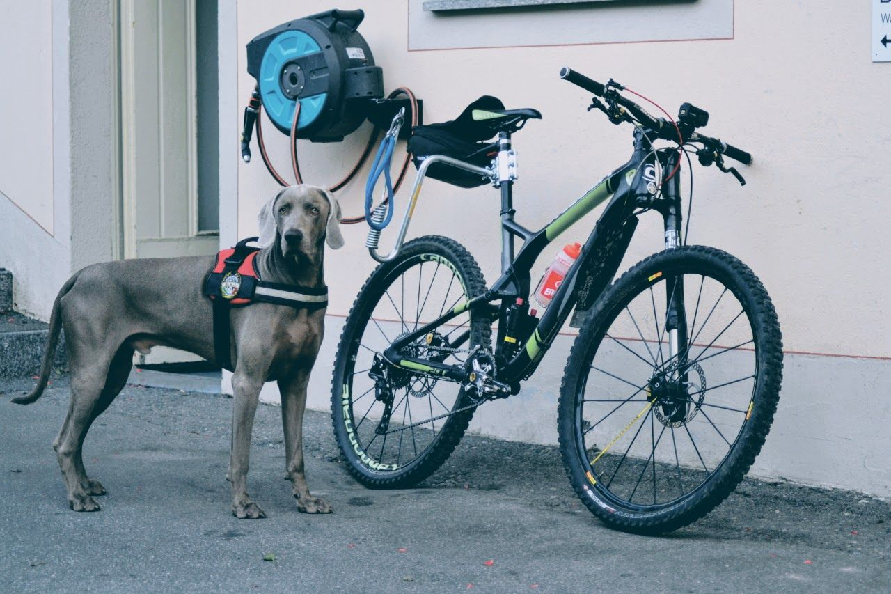 mtb-tour-with-dog-2.jpg