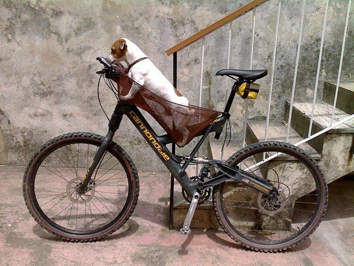 taking-a-dog-on-mountainbike