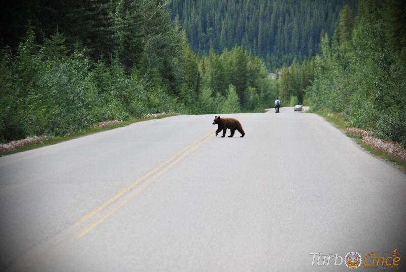 mtb in canada tra orsi e alci